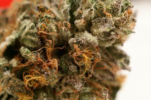 Manicure o concia della marijuana