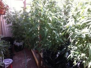 Migliori SIstemi di illuminazione per coltivare Marijuana