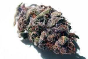 cannabis nutrienti